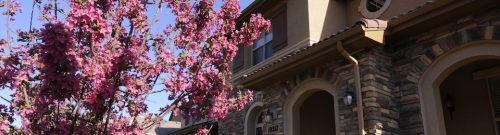 Homes in Lone Tree Bluffmont Estates Spring